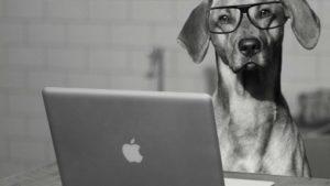 software veterinario VETERCOP